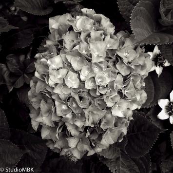 20120617-IMG_2481